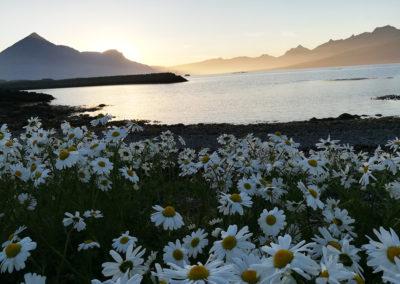 Islande, Djúpivogur