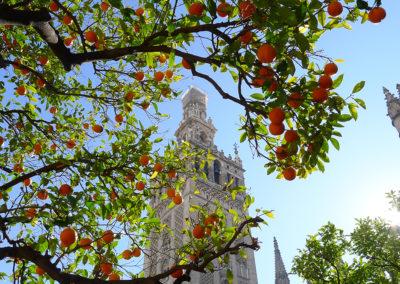 Seville, la Cathédrale